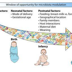 Uso de antibióticos y su relación con problemas conductuales en los niños